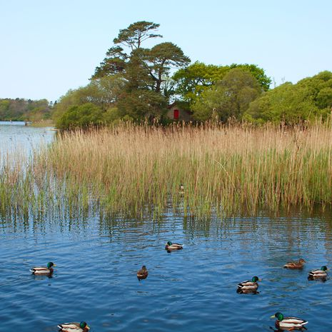 Travel picture of Lough Leane