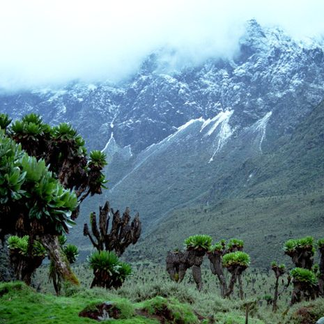 Travel picture of Rwenzori Mountains